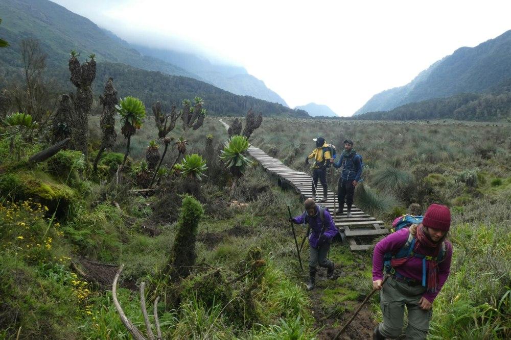 הליכה על הסולמות בטראק הרי הרוונזורי