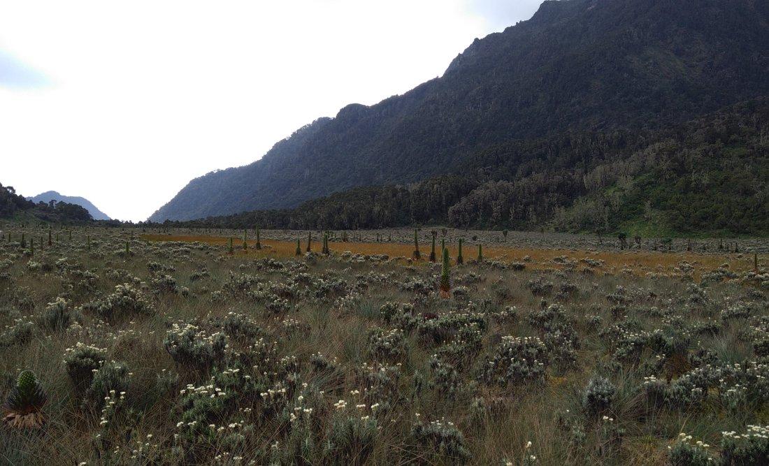 נוף וצמחיה בהרי הרוונזורי