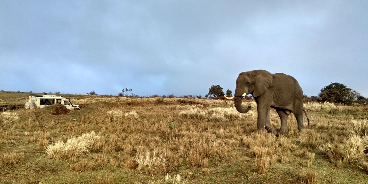 עלויות טיול באפריקה