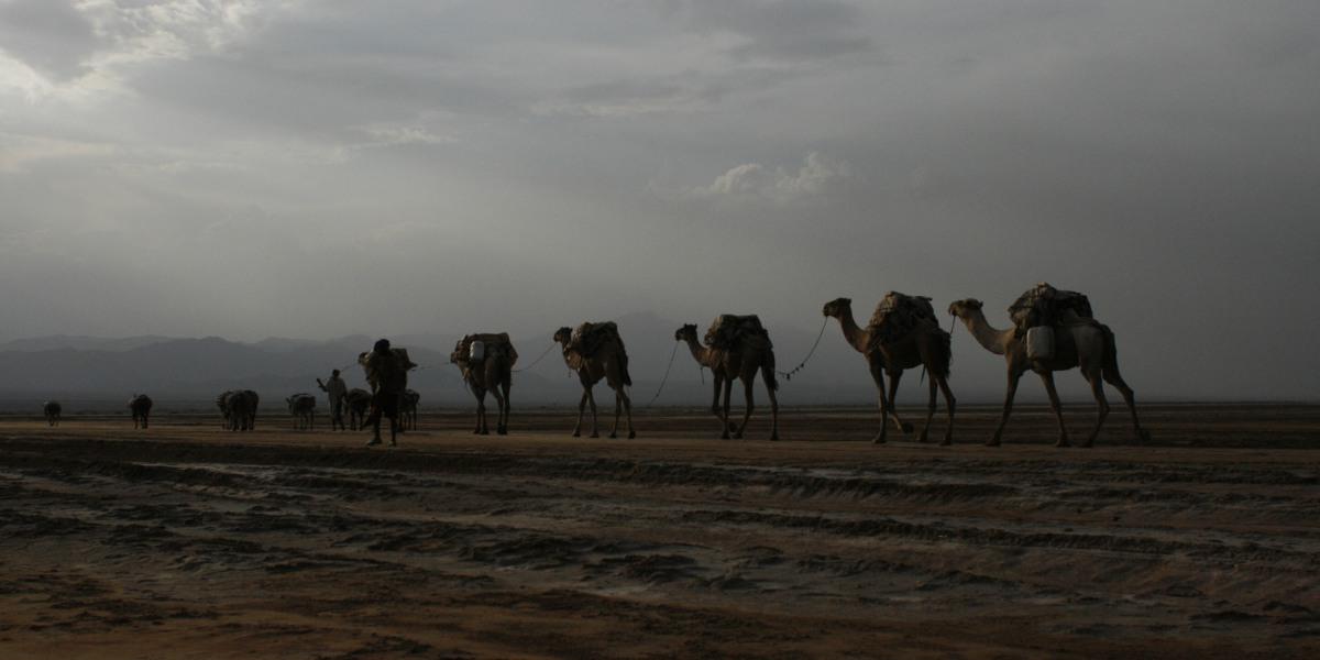 שיירת גמלים באתיופיה