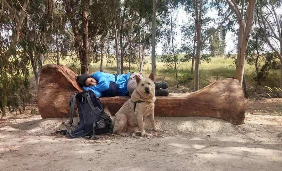 לטייל עם הכלב בארץ