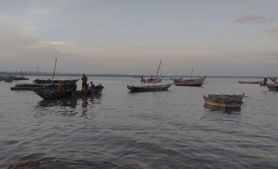 סירות דייגים בשוק הדגים של טנגה בטנזניה