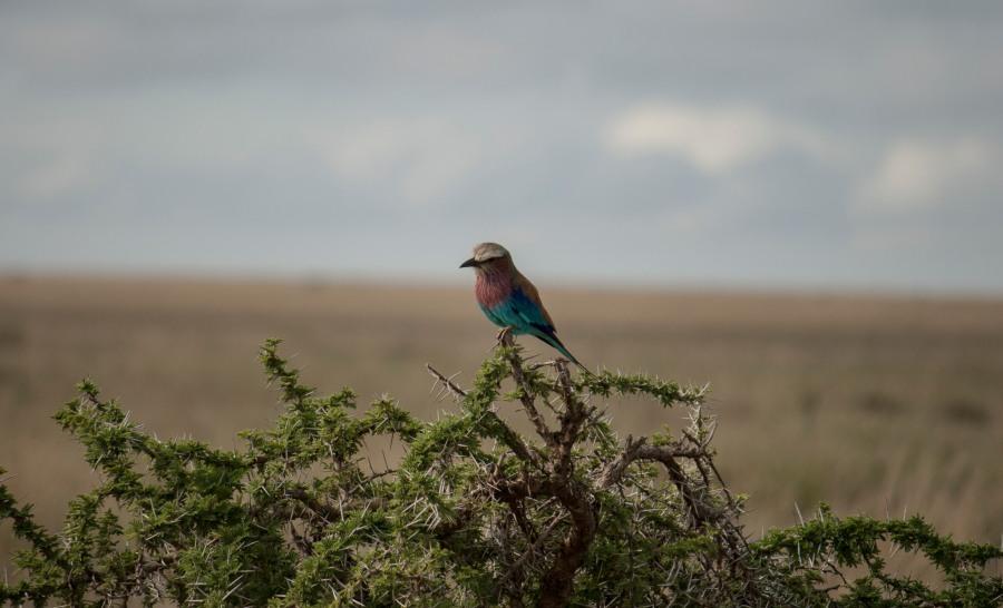 ציפור בספארי בטנזניה