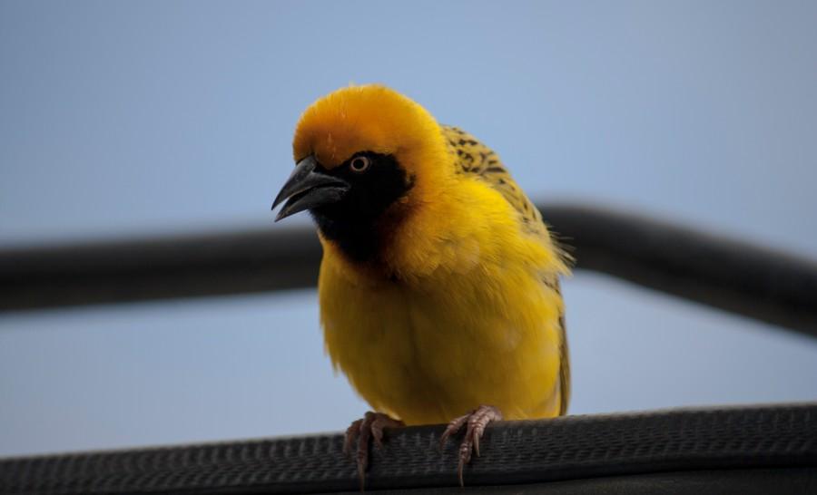 אחד מזני הציפורים בטנזניה