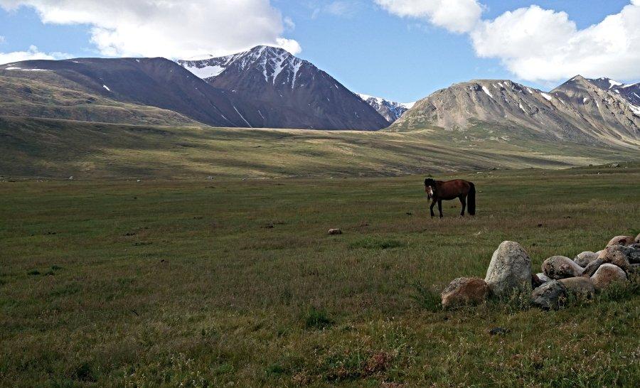 שמורת הטאבן בוגד - סיבה טובה להגיע לעיר אולגי במונגוליה