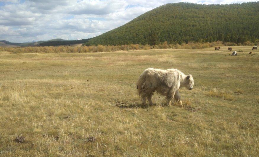 נפרדים ממונגוליה