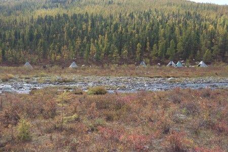 תצפית אל שבט איילי הצפון
