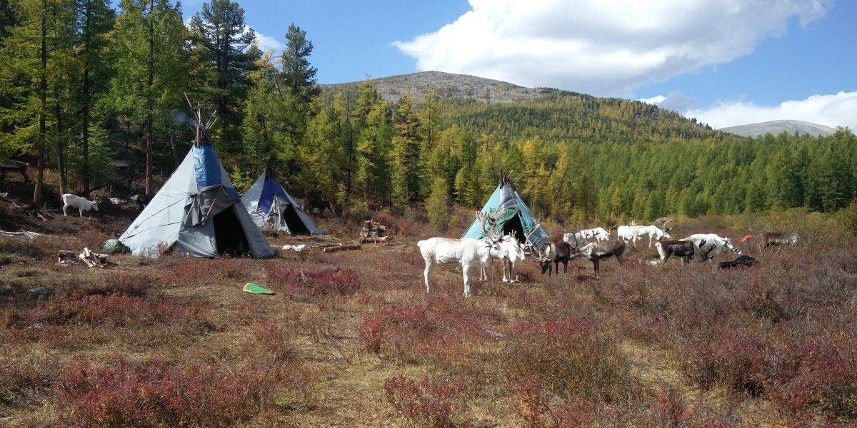 שבט איילי הצפון במונגוליה