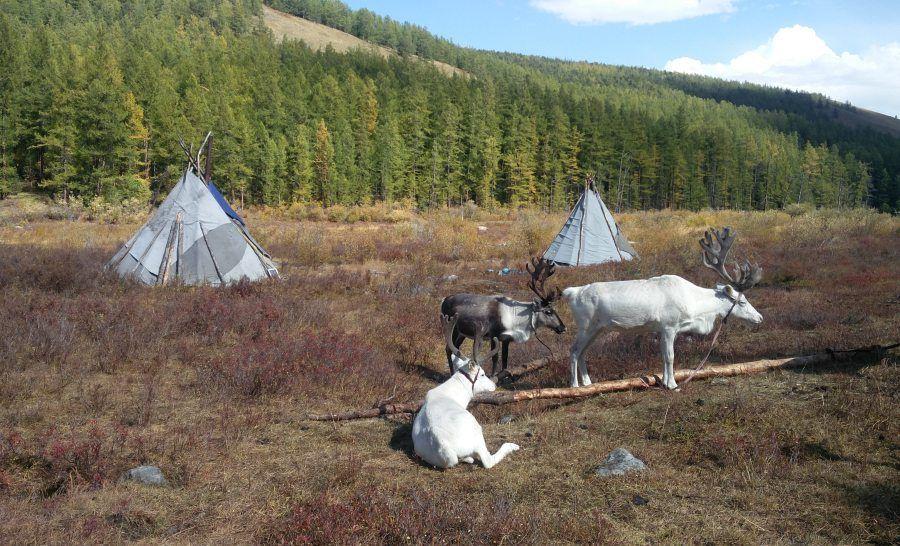 הכפר של שבט איילי הצפון