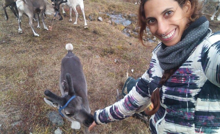 אייל קטן מלקק מלח מהיד אצל שבט איילי הצפון