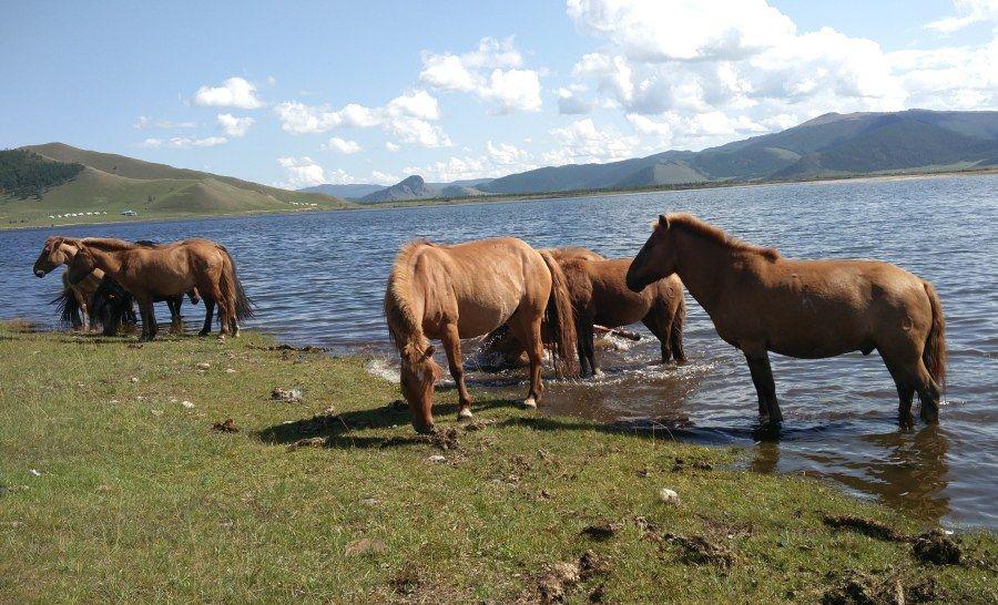 האגם הלבן במונגוליה